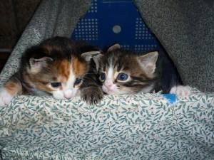 Zwei kleine Mäusejäger