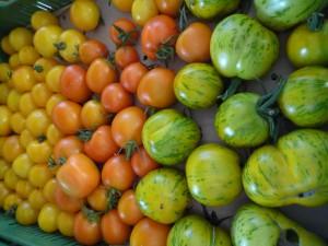 Tomaten in allen Farben