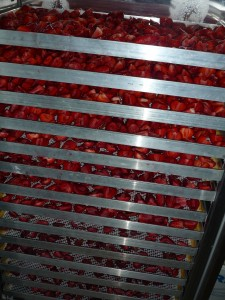 Erdbeeren im Profi-Trocknungsgerät